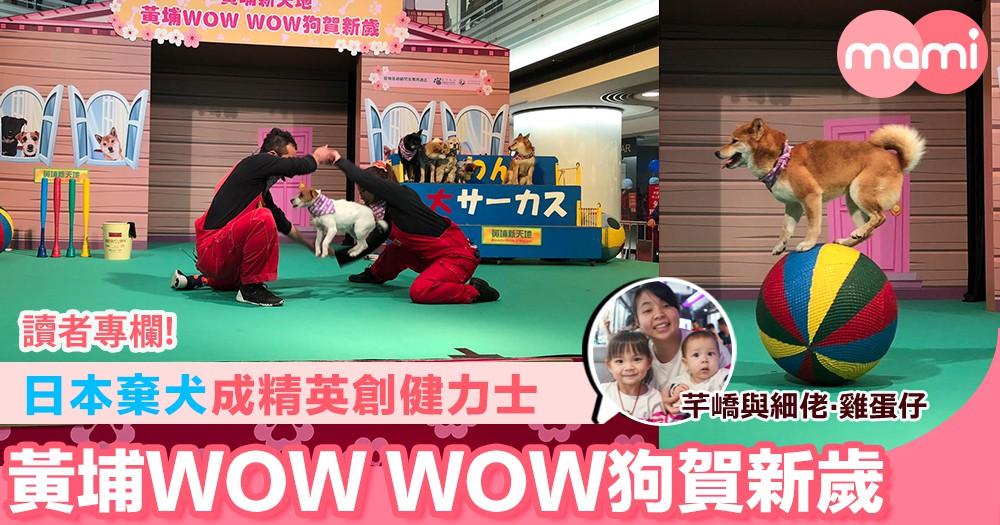 【日本棄犬成精英創健力士 黃埔WOW WOW狗賀新歲】